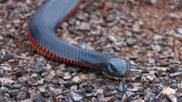 How to avoid snakes by the house